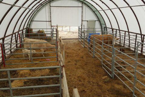 cattle handling 2 30x65